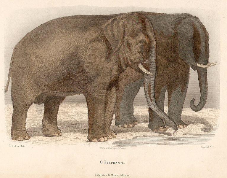 Gravure colorée à la main par H. Gobin et gravé par Ramus imprimé en France par Lamoureaux de Paris - 1890 Source: Dr. Nuno Carvalho de Sousa Private Collections - Lisbonne