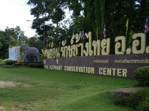 thai-elephant-conservation-center