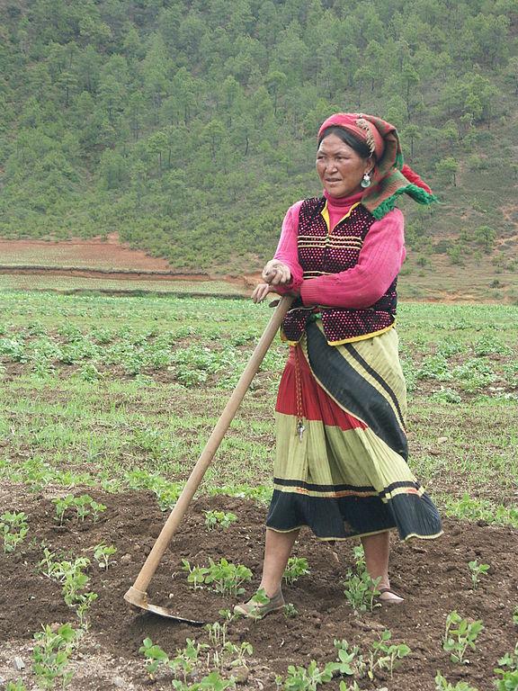 Femme Moso travaillant dans un champs, près du lac Lugu.