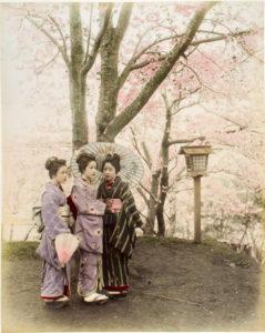 Jeunes japonaises devant un cerisier en fleurs (cers 1900).
