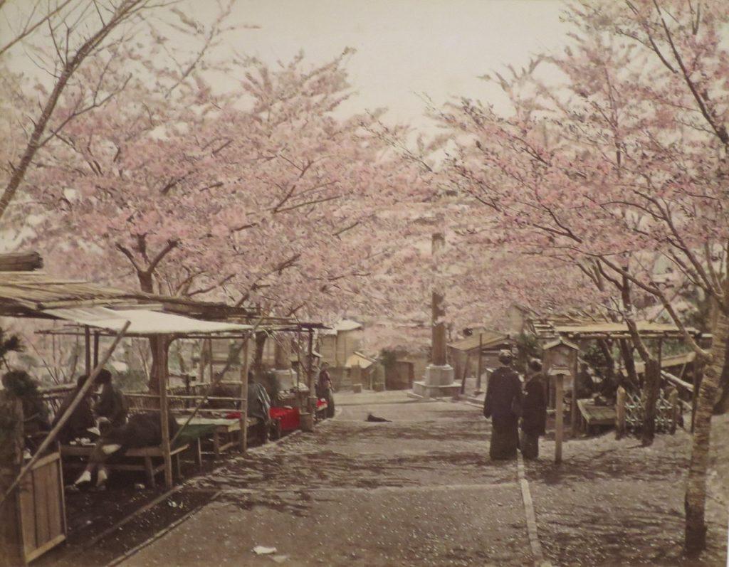 Noge Yama, cerisiers en fleurs par Tamamura Kozaburo.